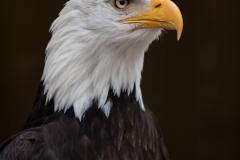 American-Eagle4W